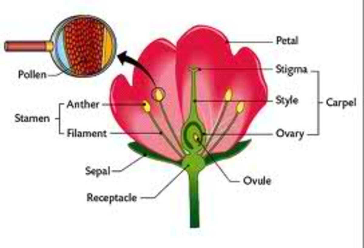 Structure of Flower