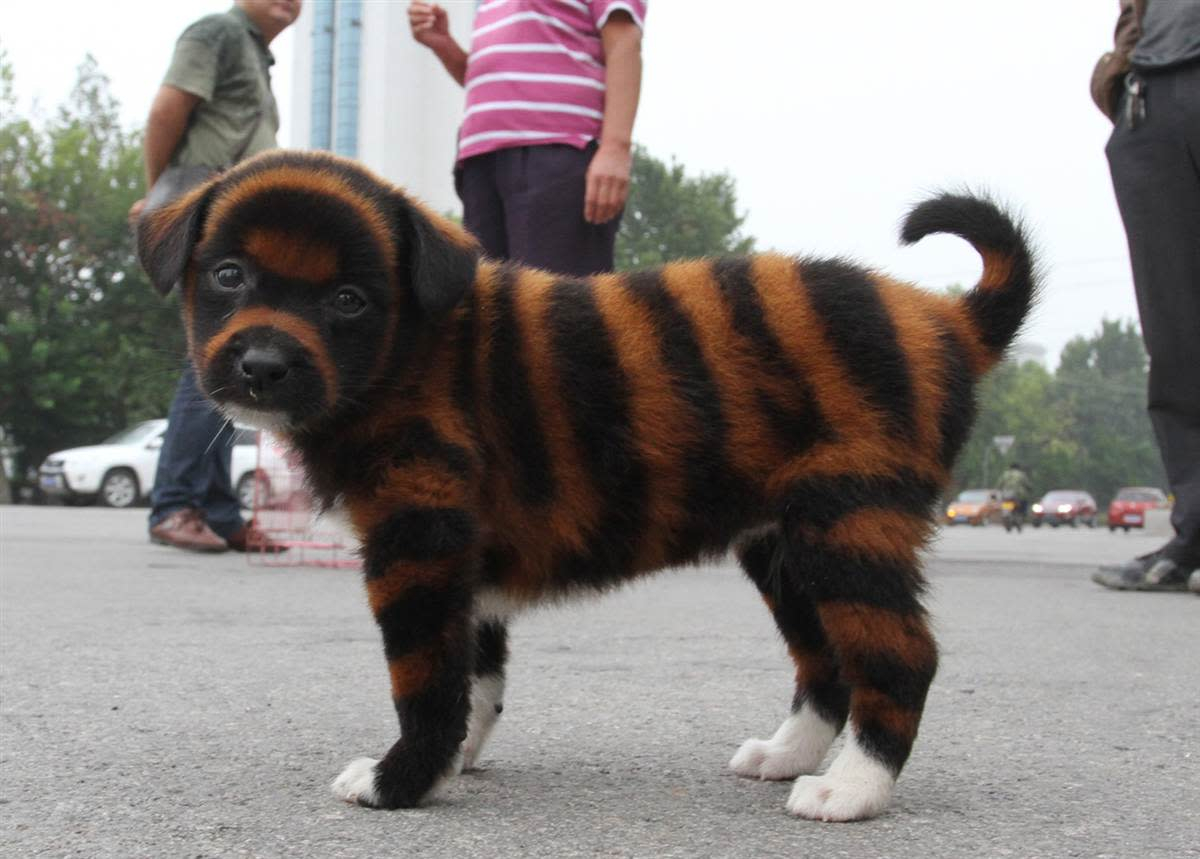 Striped Dogs