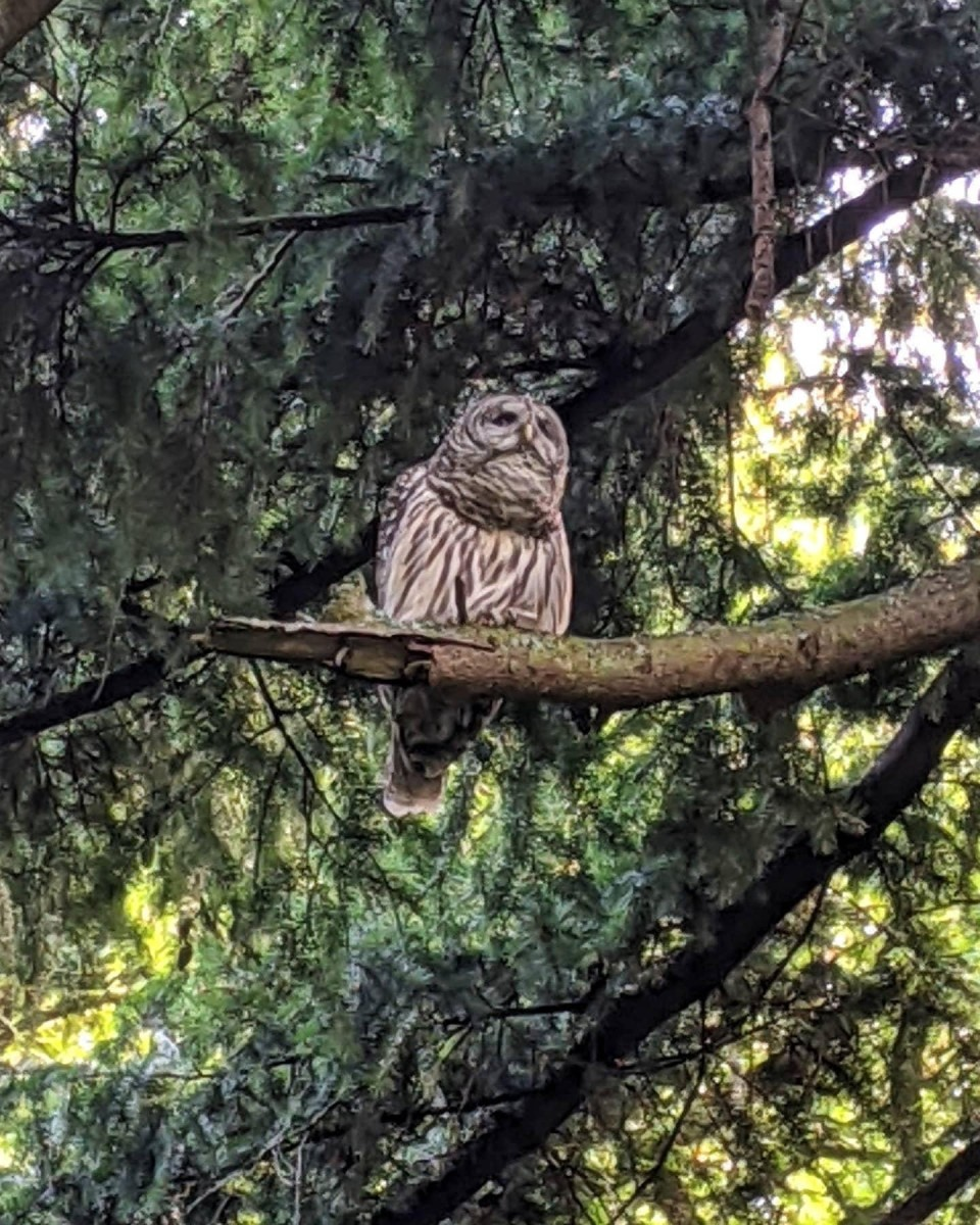 friday-morning-owl-suggests-slowing-down