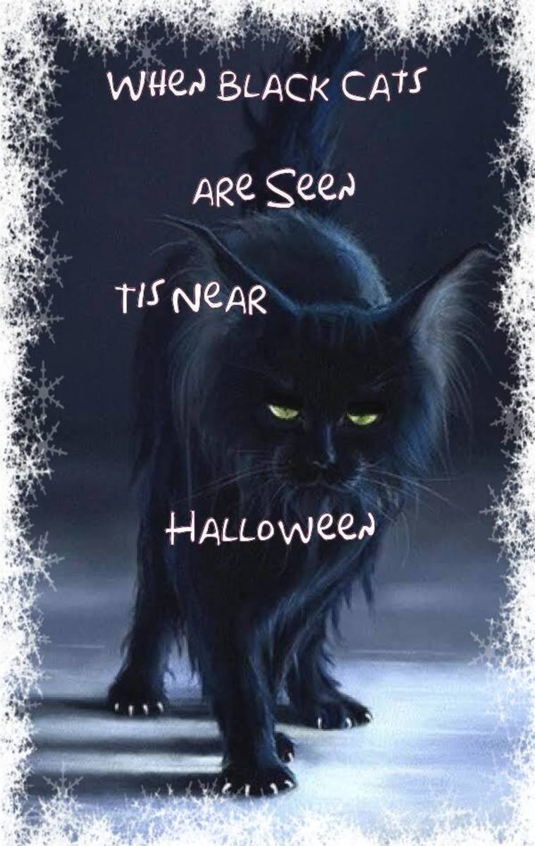 When Black Cats Are Seen Tis Near Halloween