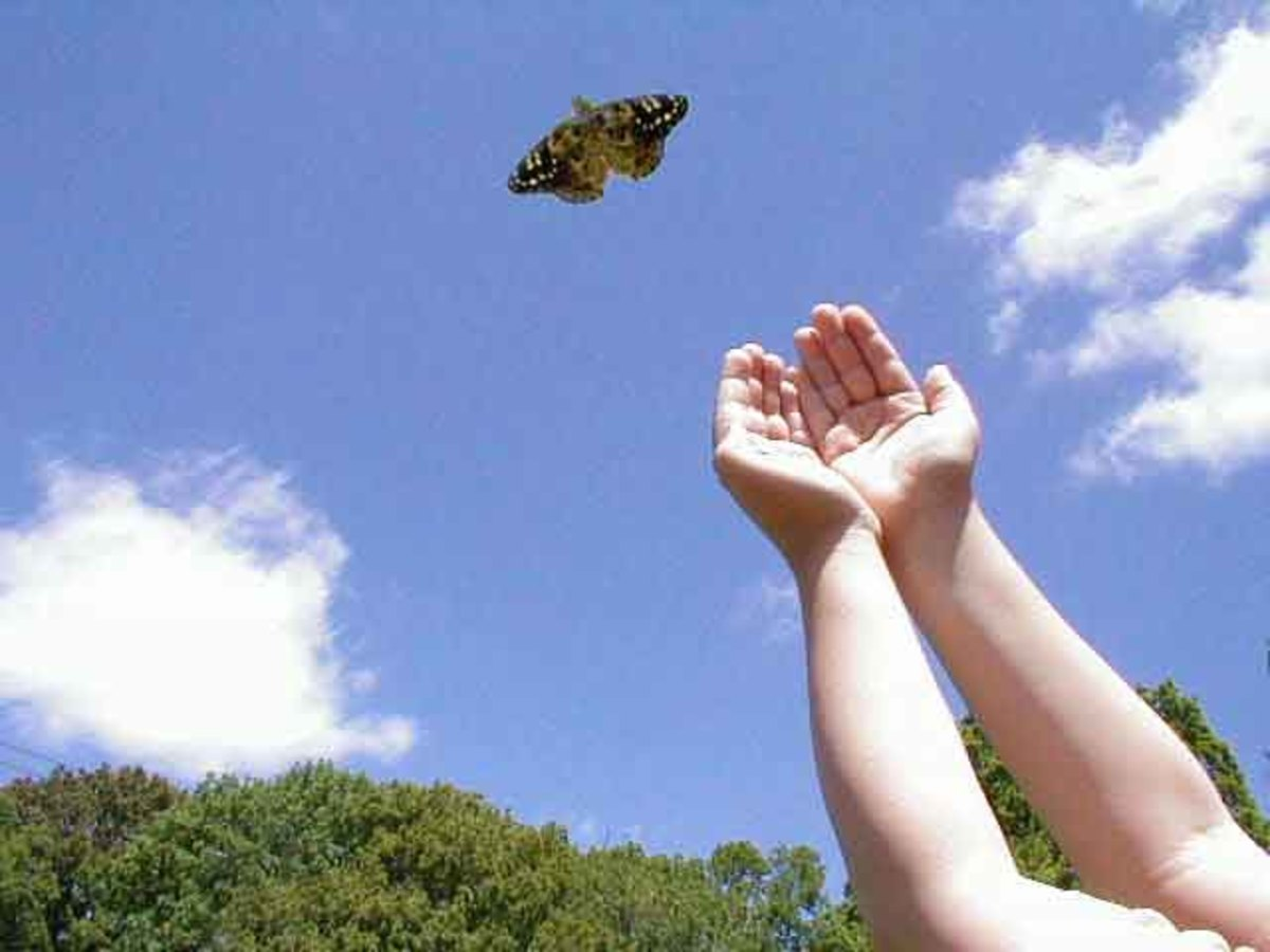 Recovery - Butterfly Metaphor