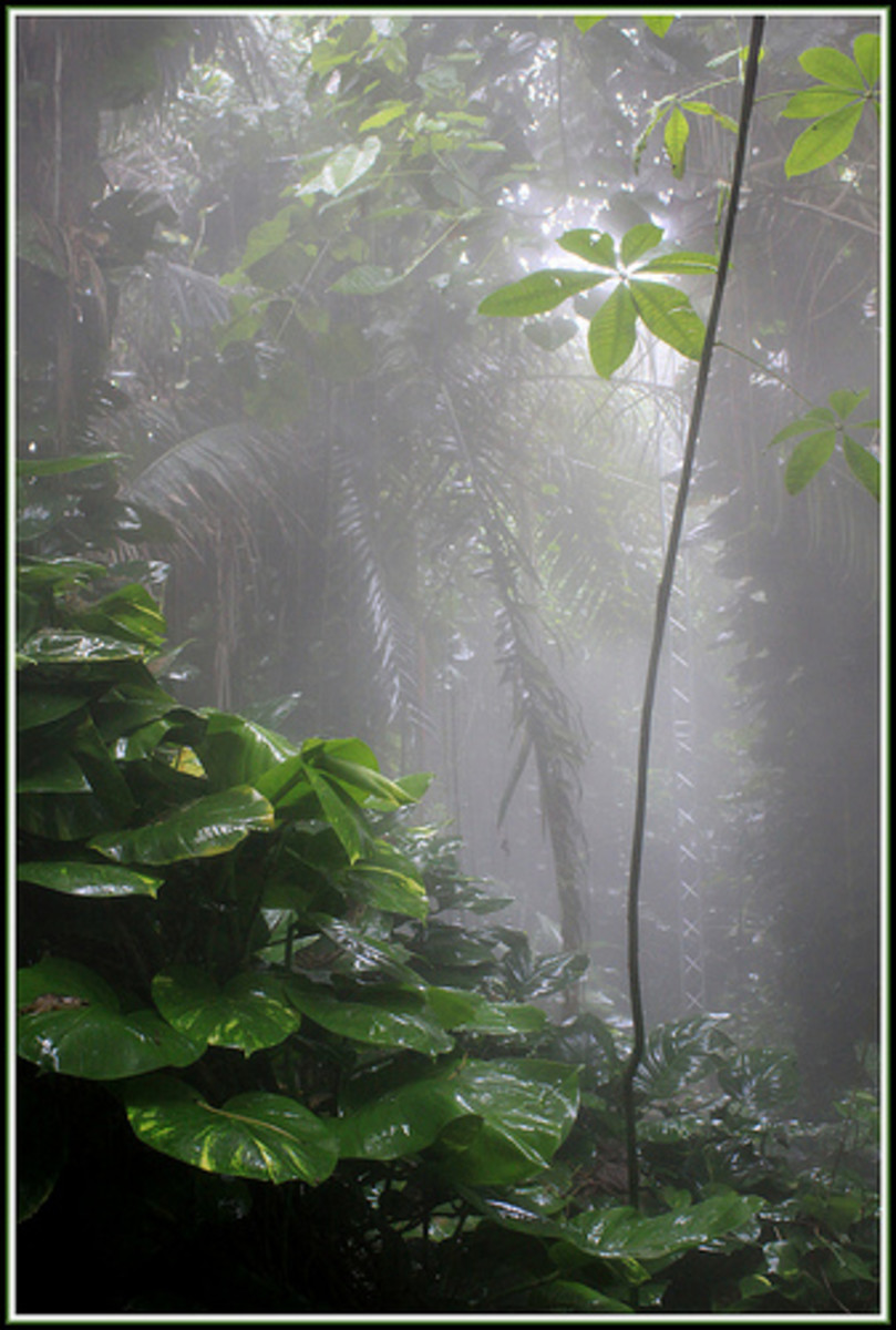 why should tropical rainforests be conserved essay Tropical rainforest essay a+  this leads us to why most tropical rainforest are located there since the sun is  why should tropical rainforests be conserved .