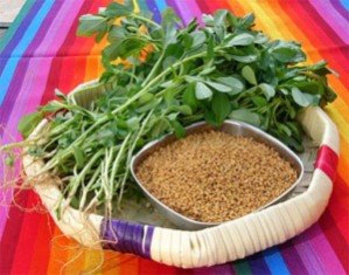 Fenugreek seeds and fenugreek leaves