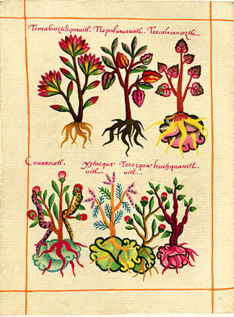 Aztec herbs used to remedy pain in blood sacrifices as well as in tasty Mexican cooking.
