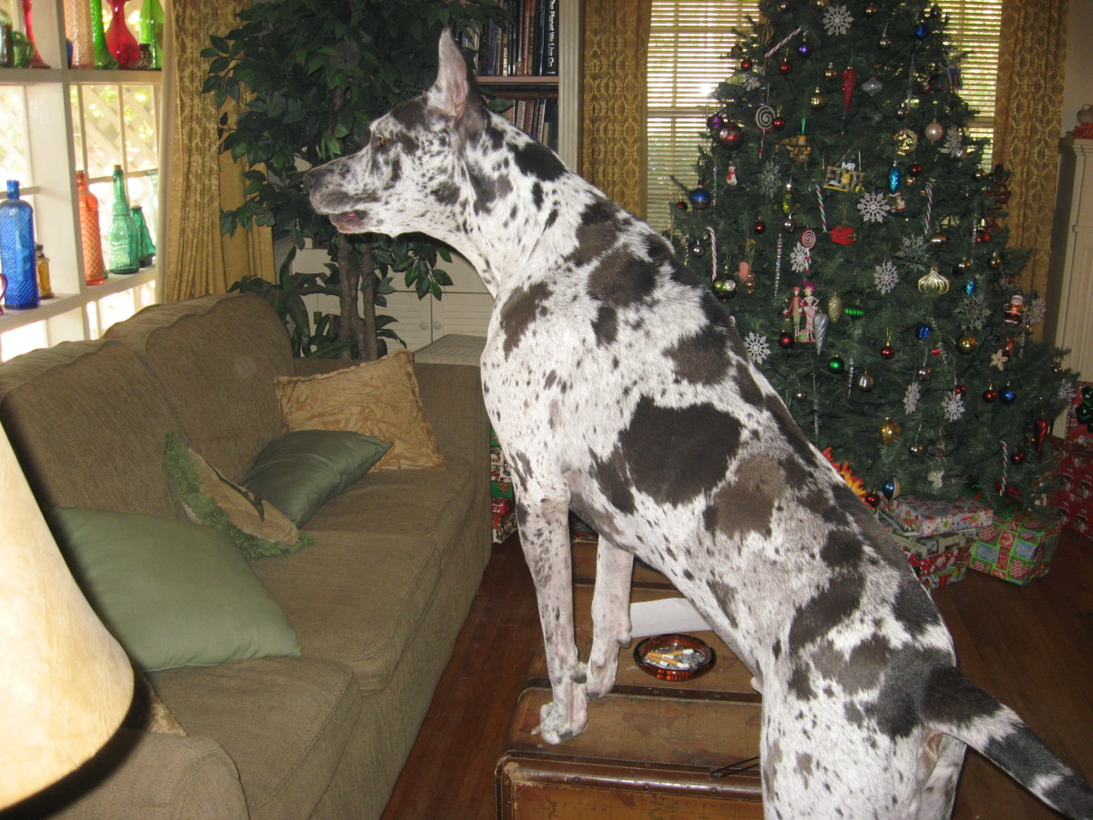 Home Protection - 180 pounds of Watchdog