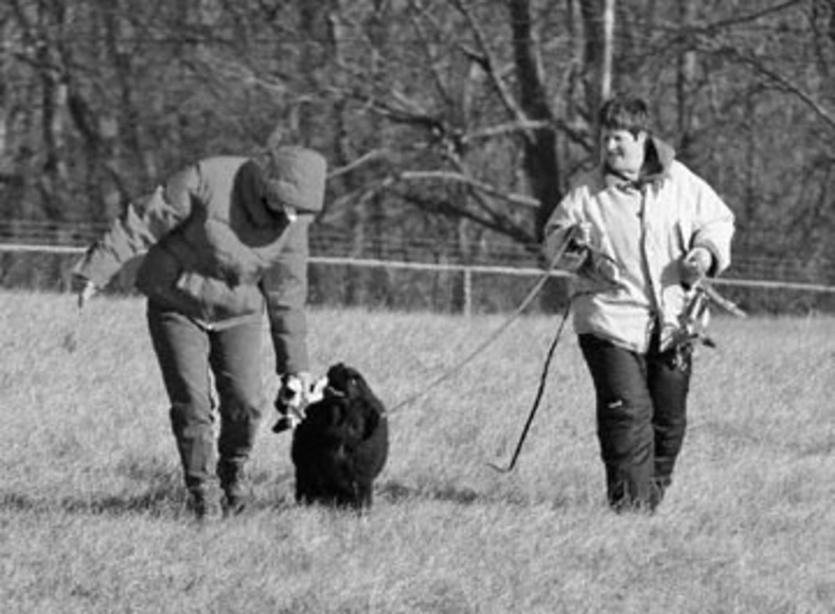 AKC Tracking Judge, Terry McGauley, praises 16 week-old Dani as his thrilled owner, Robin Love looks on. Dani completed a 220 yard track.
