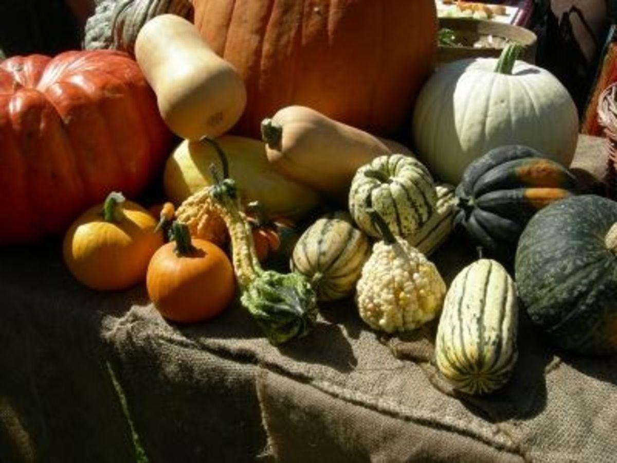 Harvest Festival Squashes