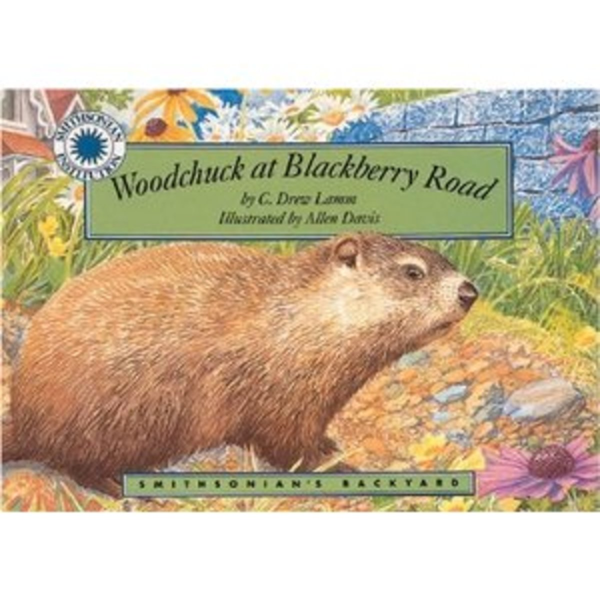 Woodchuck at Blackberry Road (Smithsonian's Backyard)