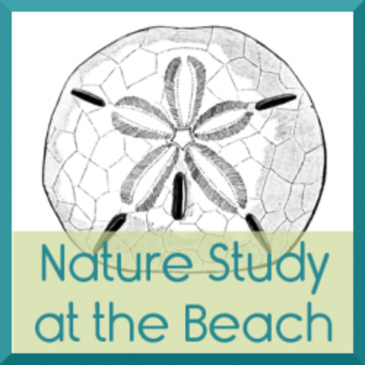 Nature Study at the Beach