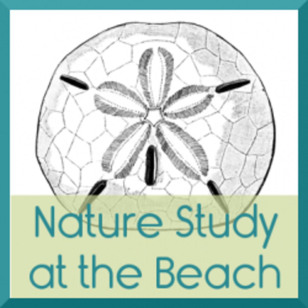 beach-nature-study