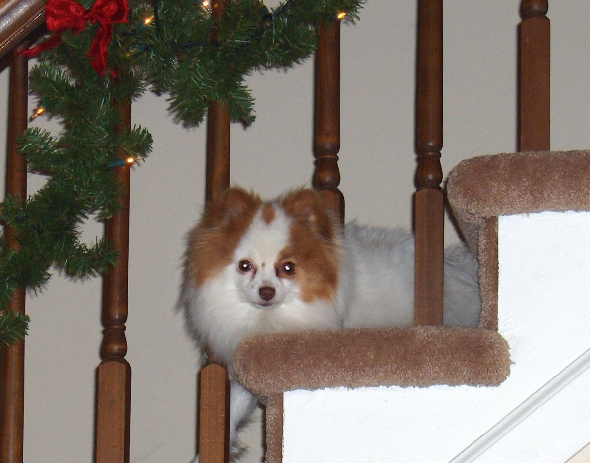 Snickerdoodle's favorite Perch