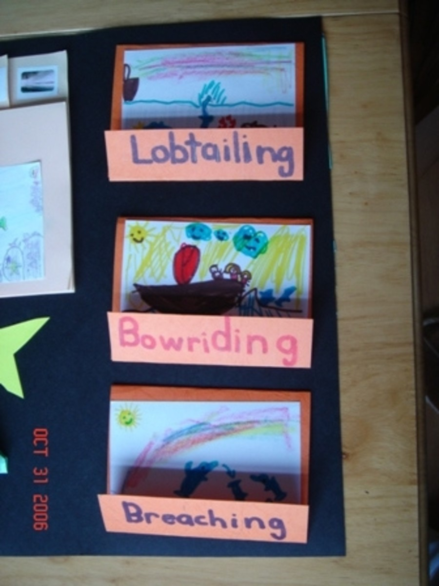 dolphin behaviors matchbooks