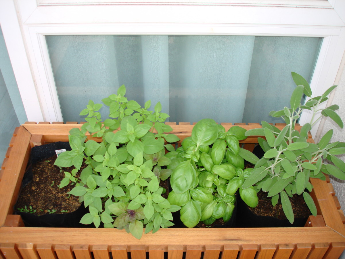 The planter box with my basil and sage