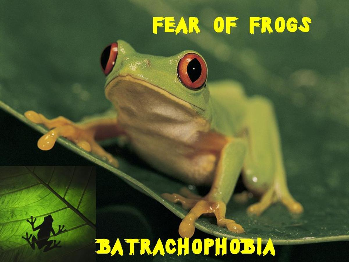 list-of-animal-phobias