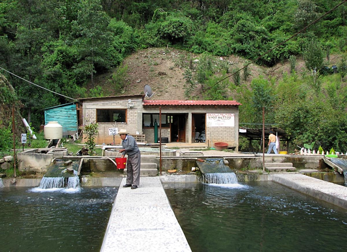 A three-pond homestead fish farm setup in a natural environment.