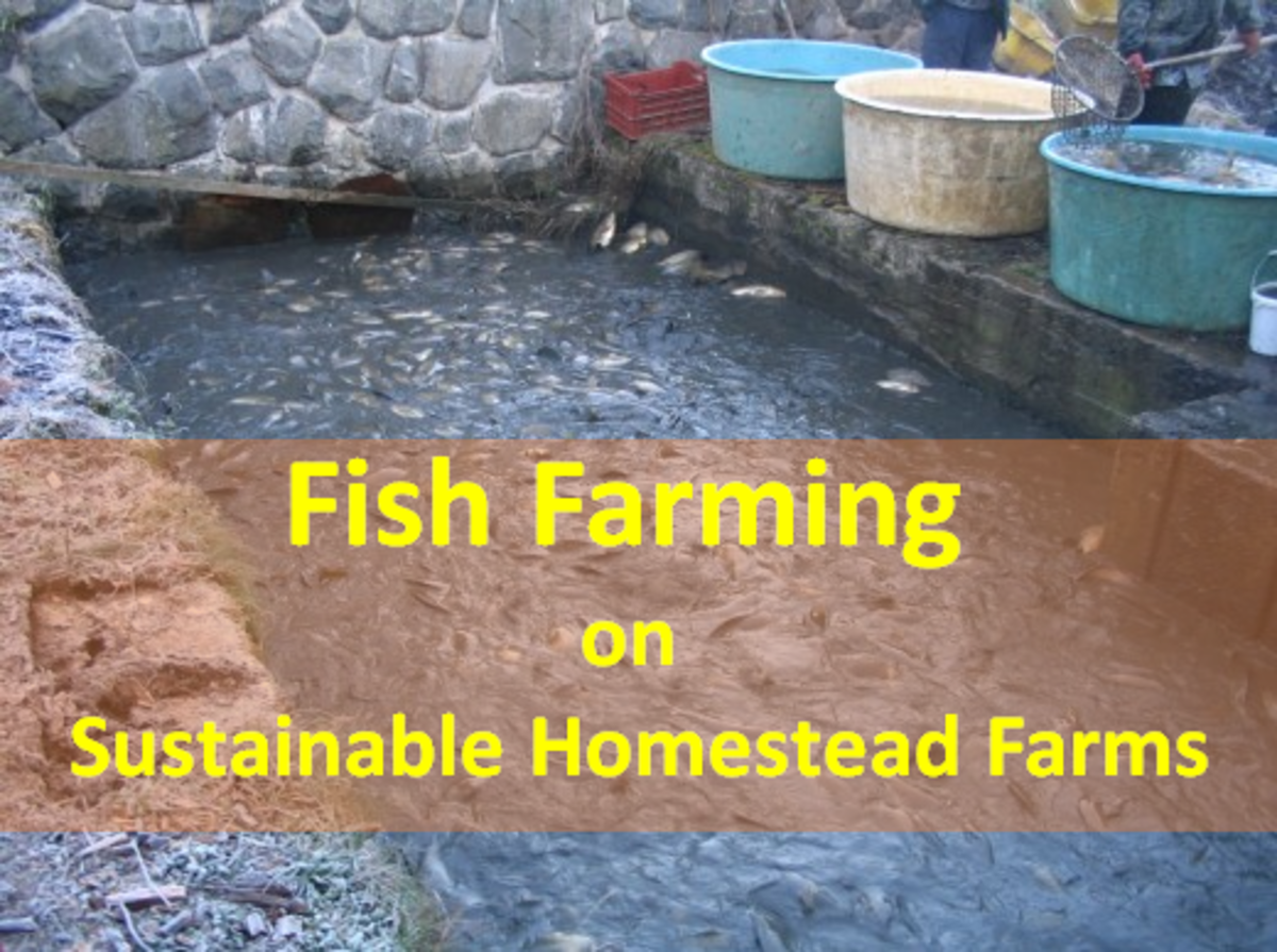 Fish Farming - Aquaculture on Sustainable Homestead Farms