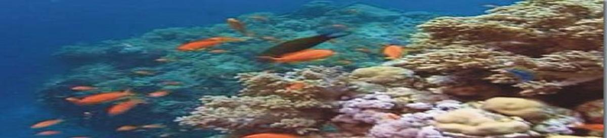 choosing-the-right-anchor-for-reef-fishing