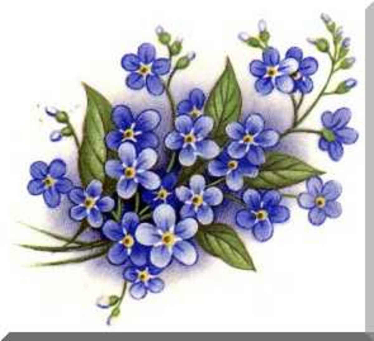 Forget-me-not flowers.  Don't forget to remember Summer and it's promise, it's sandy enjoyable warmth and fun.