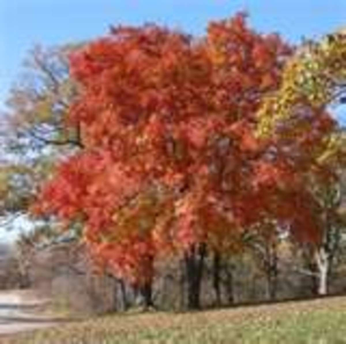 Autumn shares beautifully festive colors in the fall - and at times in our life seasons too. Autumn can give us such exciting music when we listen.