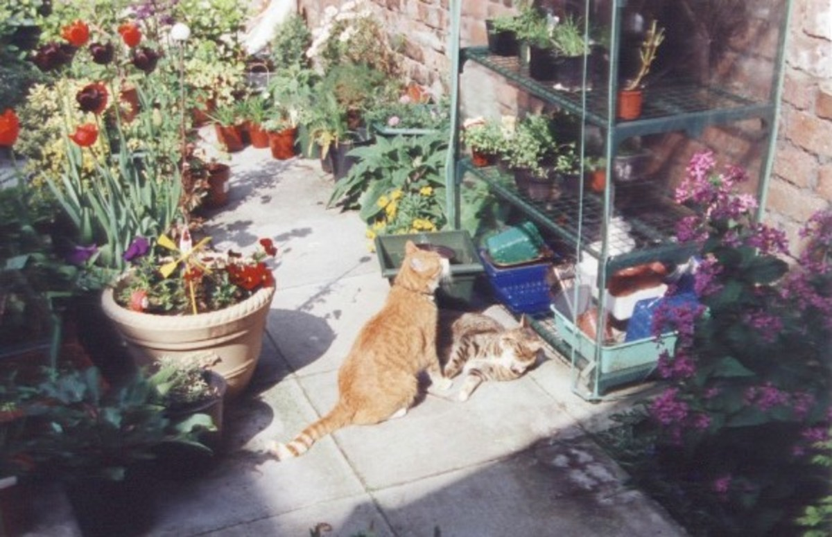 Any sunny yard can turned into a mini paradise.  Mutley and Poppy loved sun bathing there.