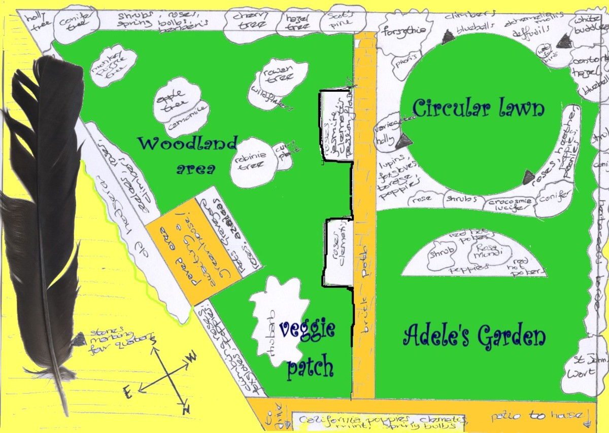 Not to scale and cheerfully low-tech, this map offers a serviceable layout of Adele's garden.  All the shrubs are underplanted with bulbs, wildflowers and ground-covering plants.