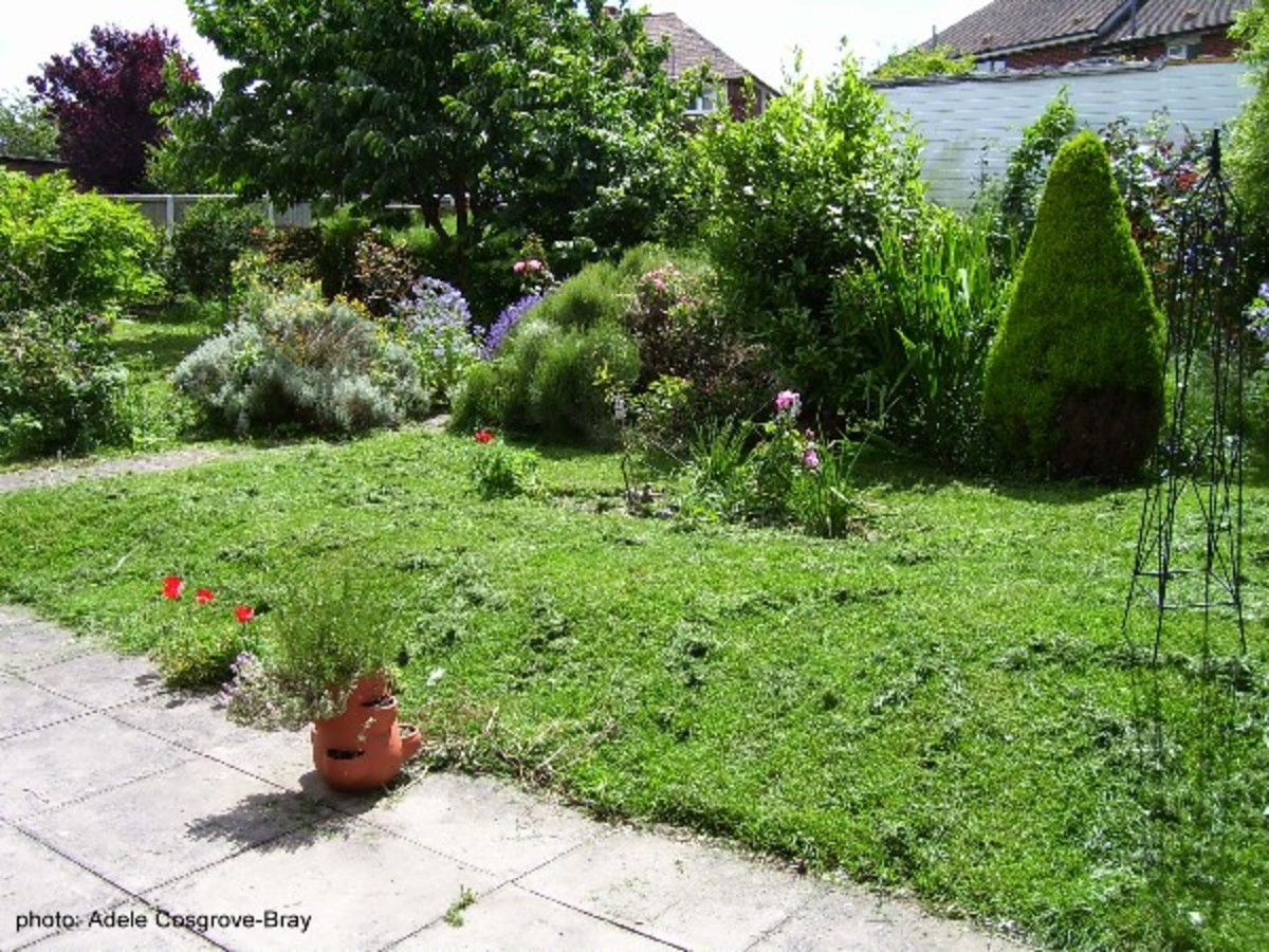 One view across the garden from the patio in 2007.  Already the planting around the circular lawn begins to create a private area.