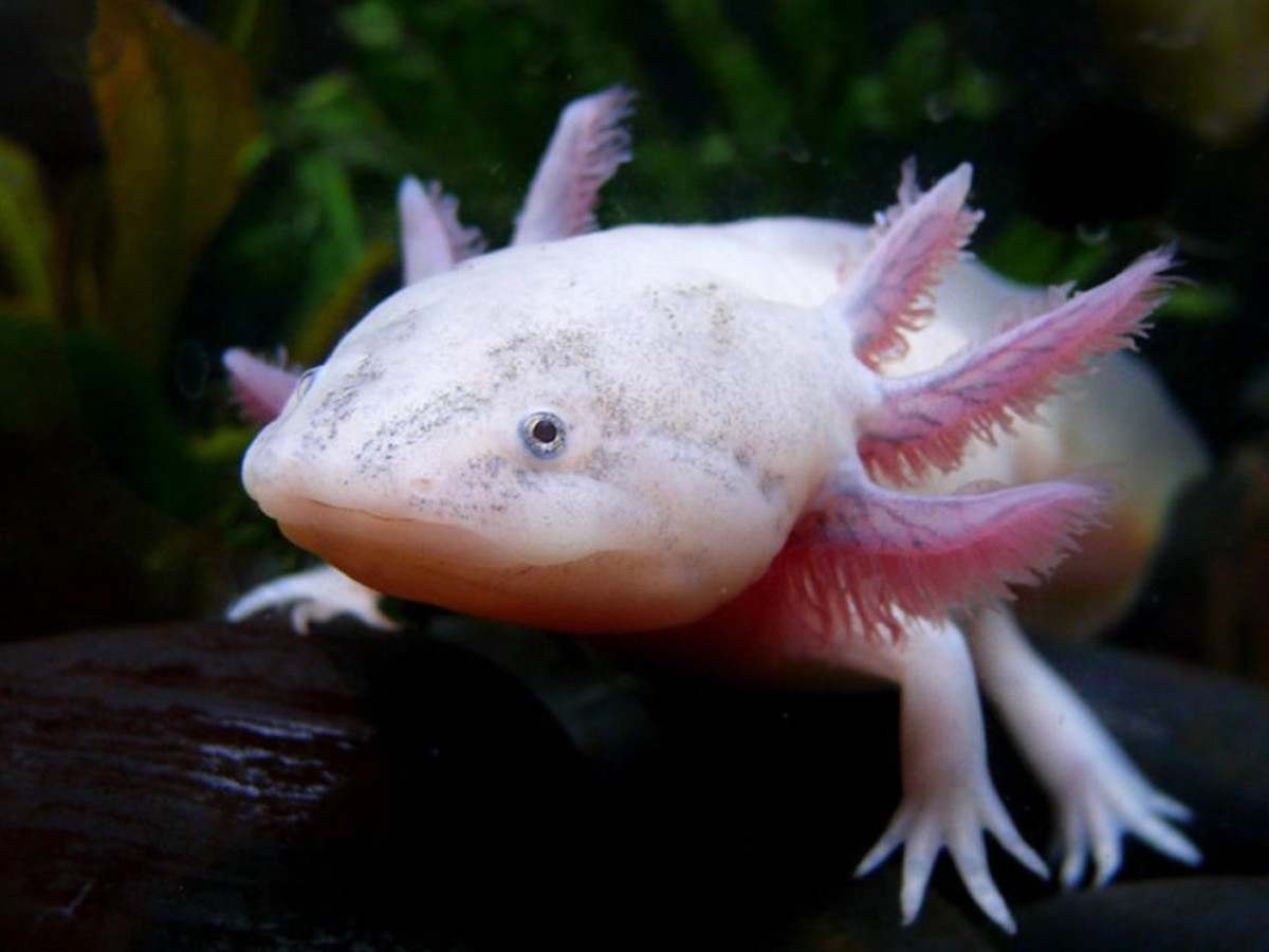 10-odd-creatures-or-an-odd-day-at-the-pet-shop