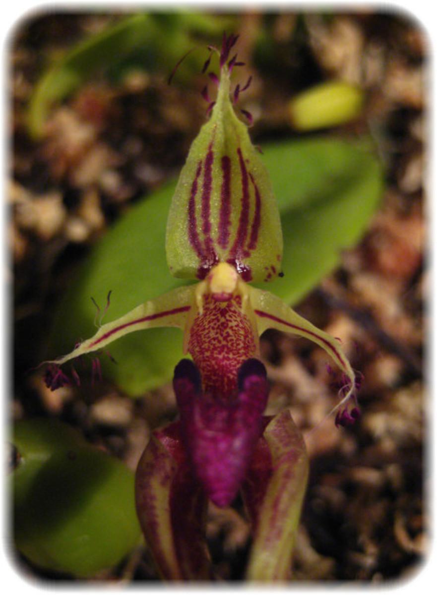 My favorite Alien Orchid