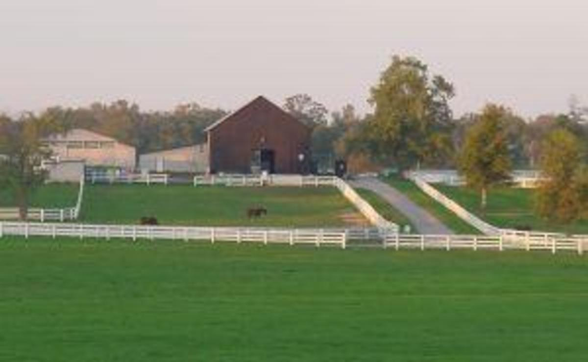 A local horse farm. William Shatner's Belle Reve Saddlebred is another farm near Nicholasville, in Versailles.