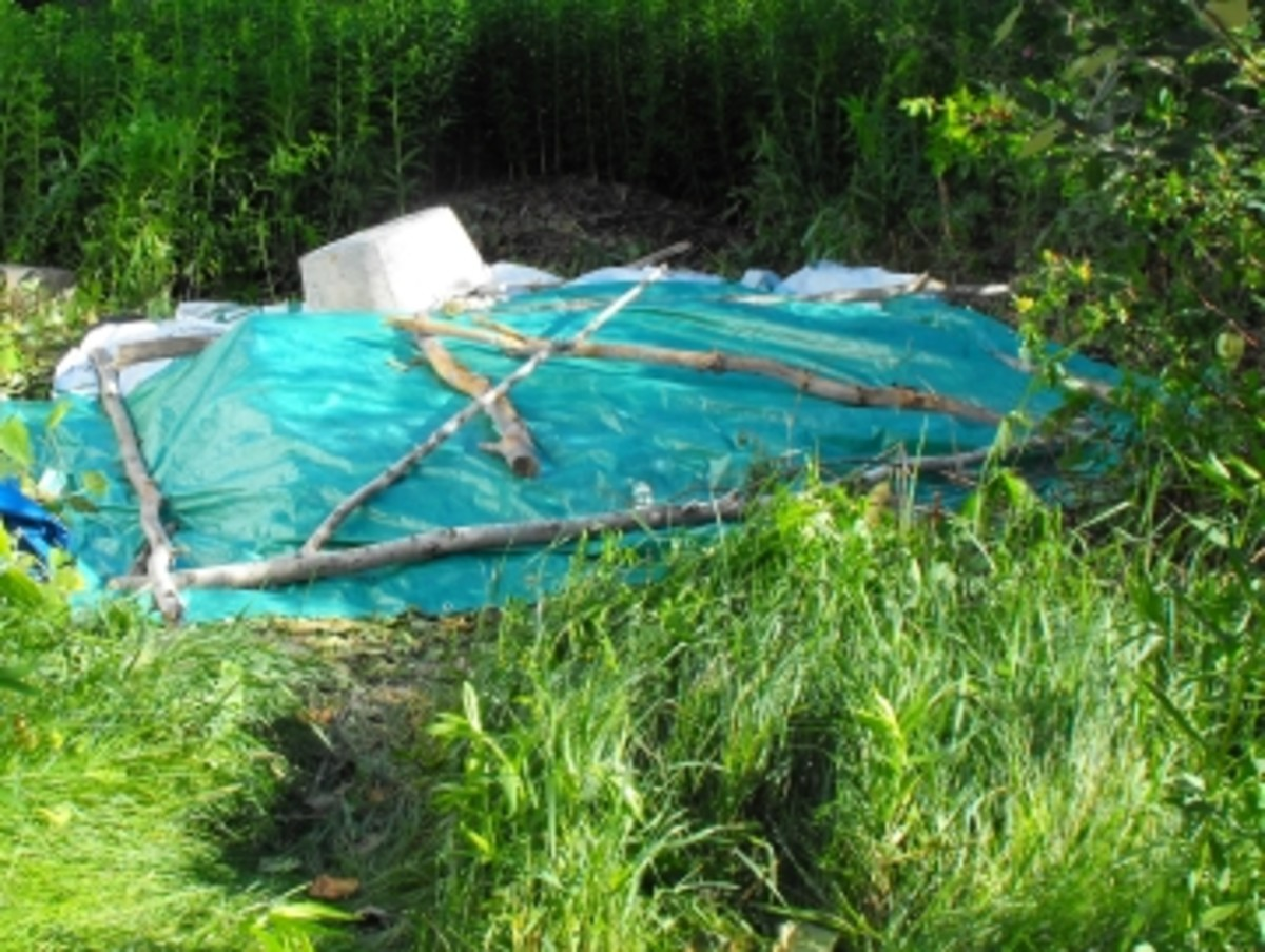 False Bamboo was piled under a tarp to rot and not allow it to regrow. Each crop has to be cut down and rotted on the site it grows on to avoid new areas of growth going rogue!