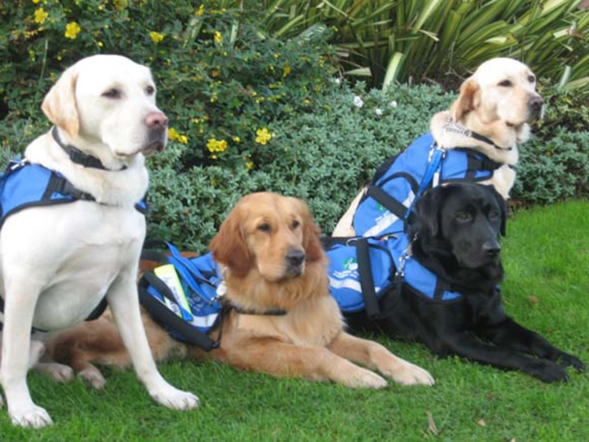 Assistance Dogs for Children