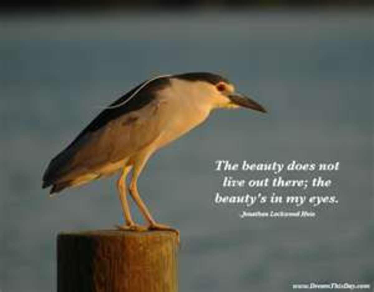 www.DreamThisDay.com Jonathan Huie