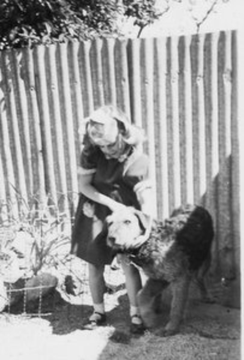 The brave and beautiful and BIG dog that was my Kim... the reason I had no fear of dogs.
