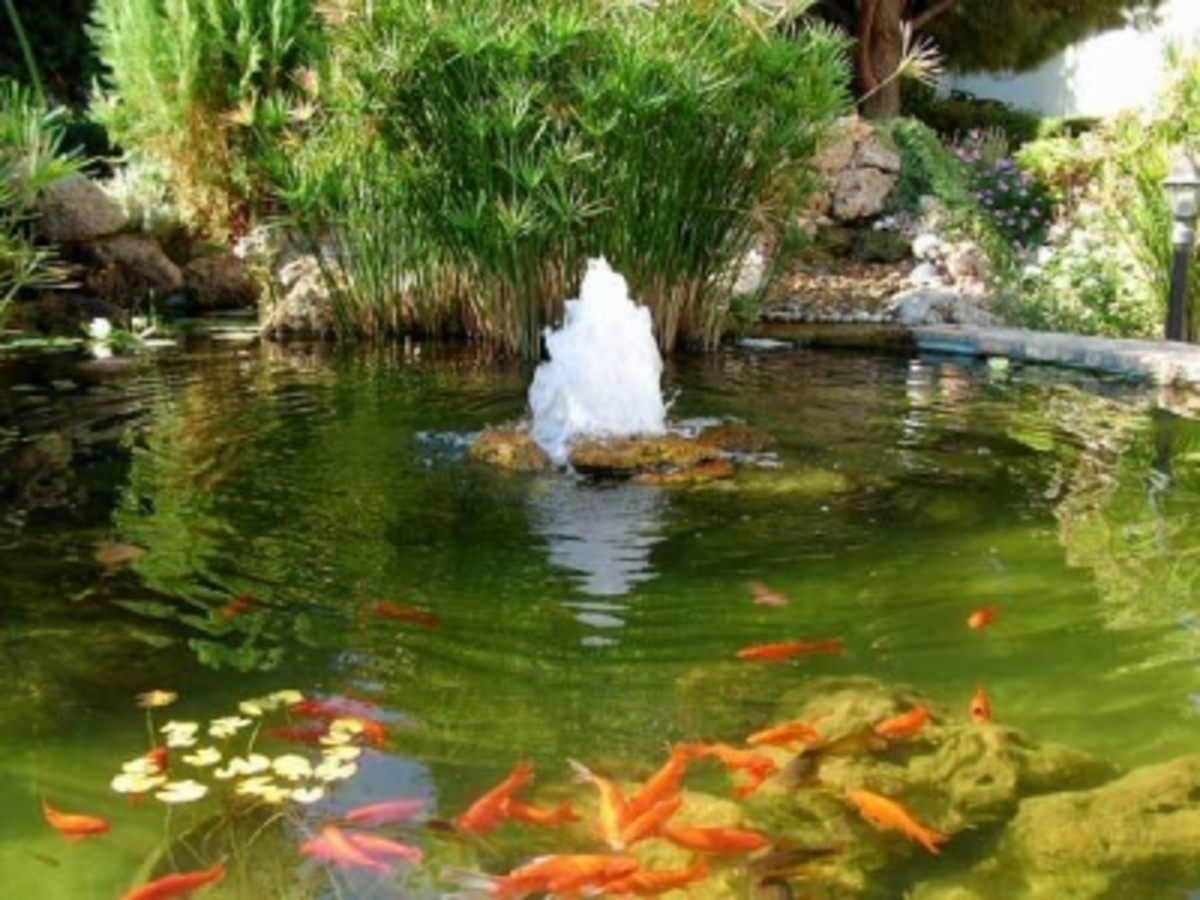 Koi pond fountain
