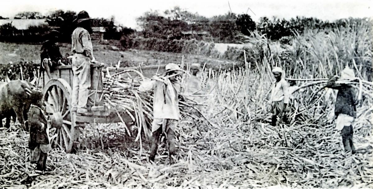 Loading cane