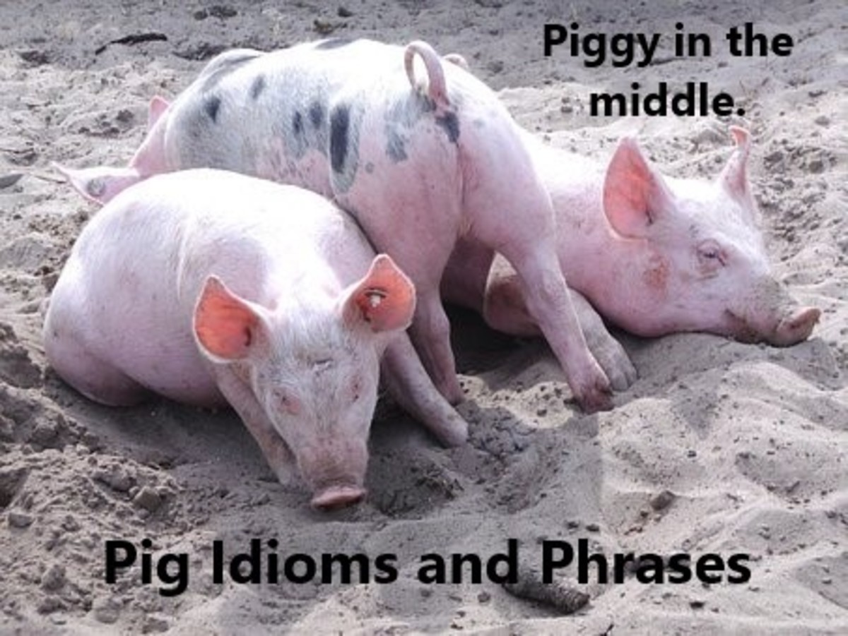 It's never comfortable being the piggy in the middle.
