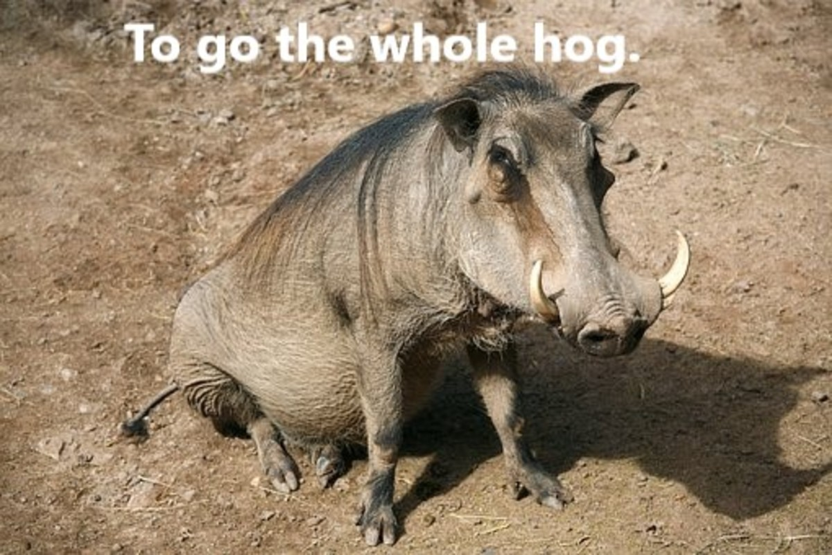 We shouldn't let this animal hog the whole show.