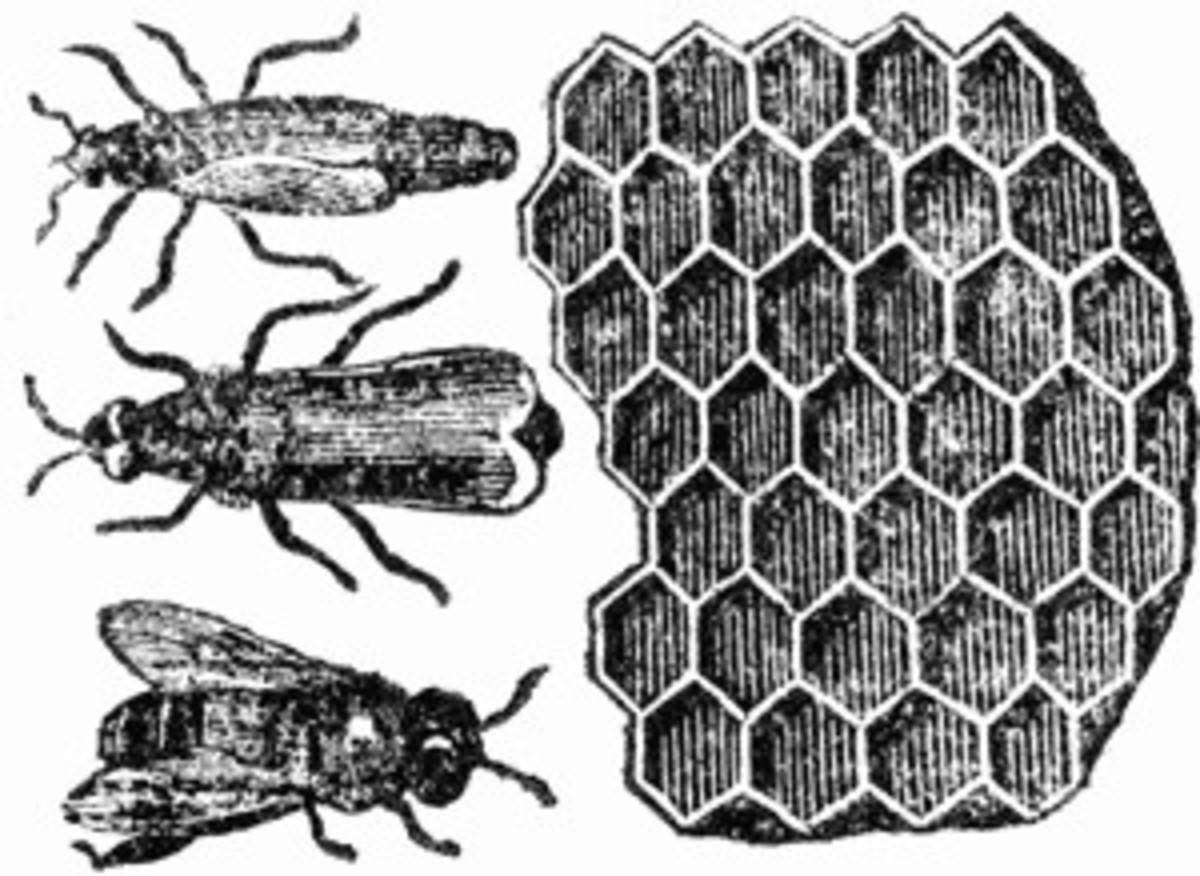 Every hive has three kinds of bees- the queen, the drones, and the labourers