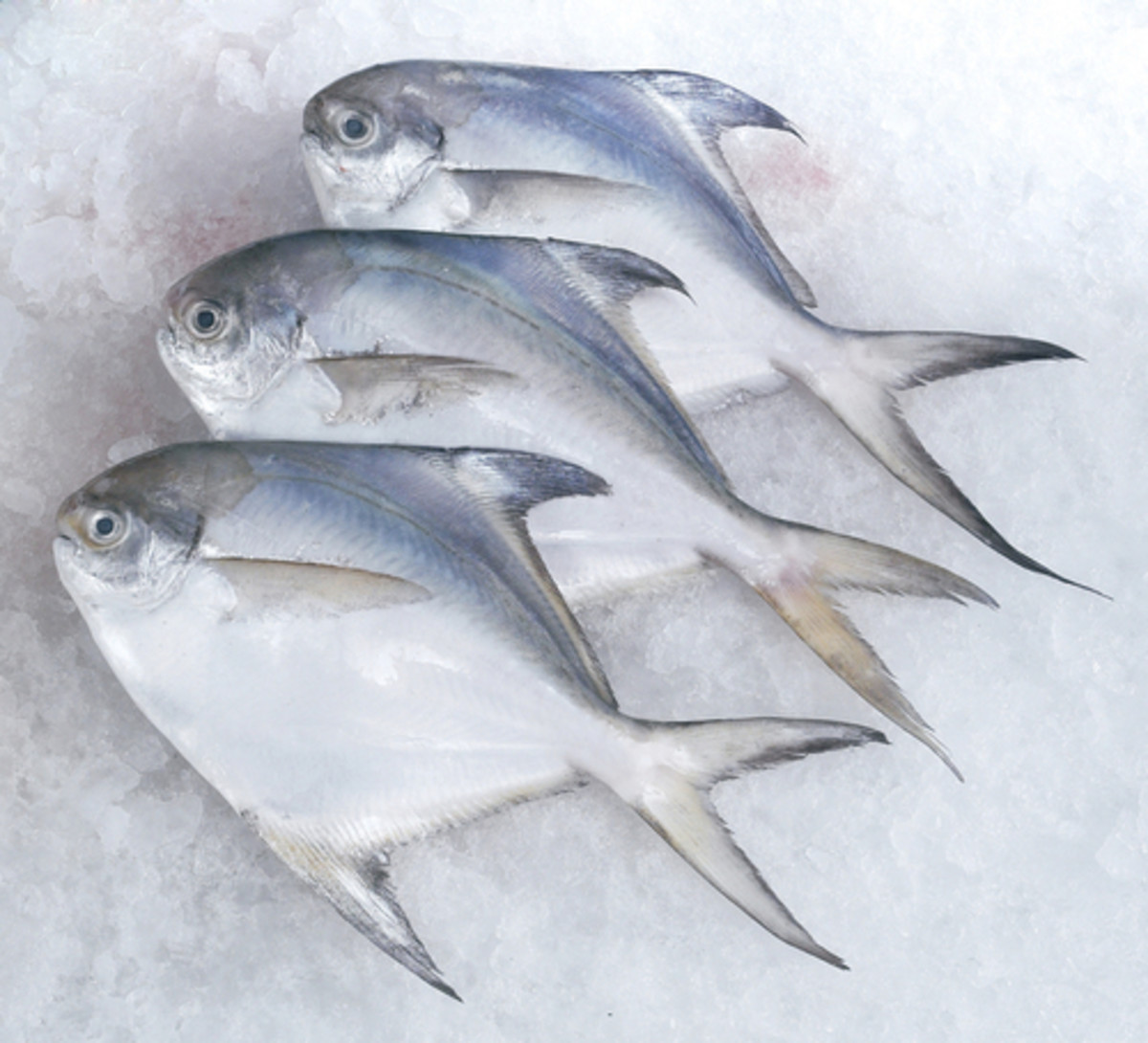 Pomfret: THE fish for Gulai Tumis Image:  discpicture|Shutterstock.com