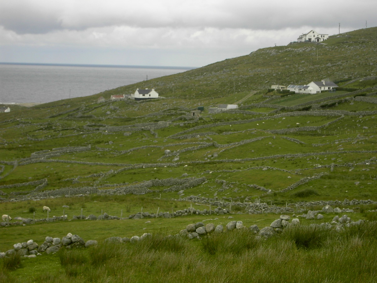 In the 1800s many Irish were tenants on poor rocky land where they relied on the potato crop to feed their families.