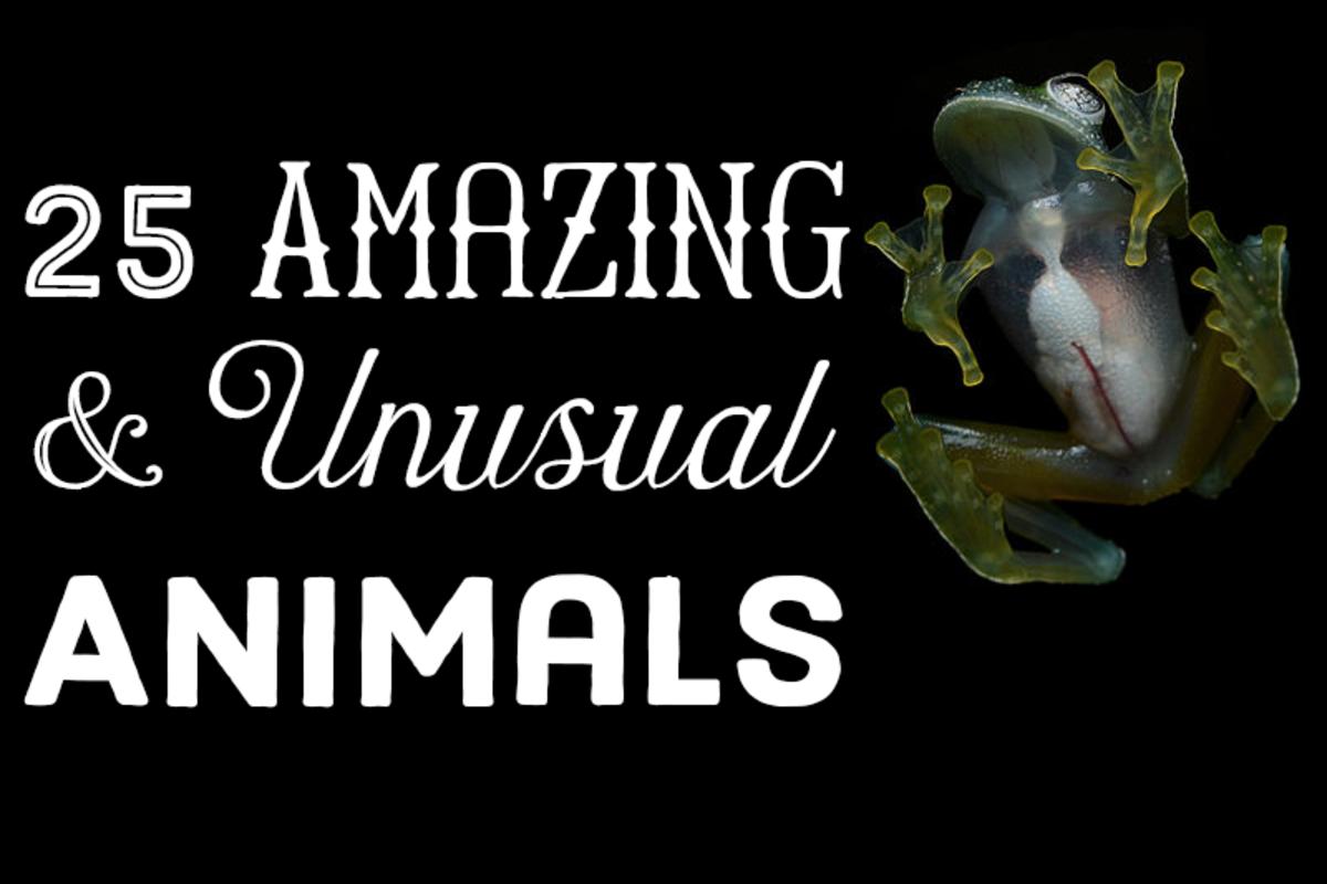 25 amazing and unusual animals.