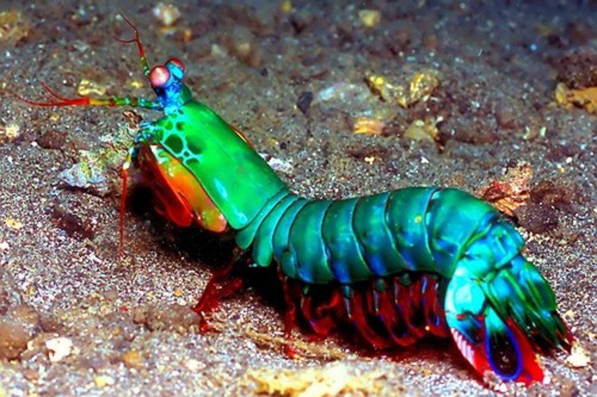 25-most-amazing-and-unique-animals-on-earth