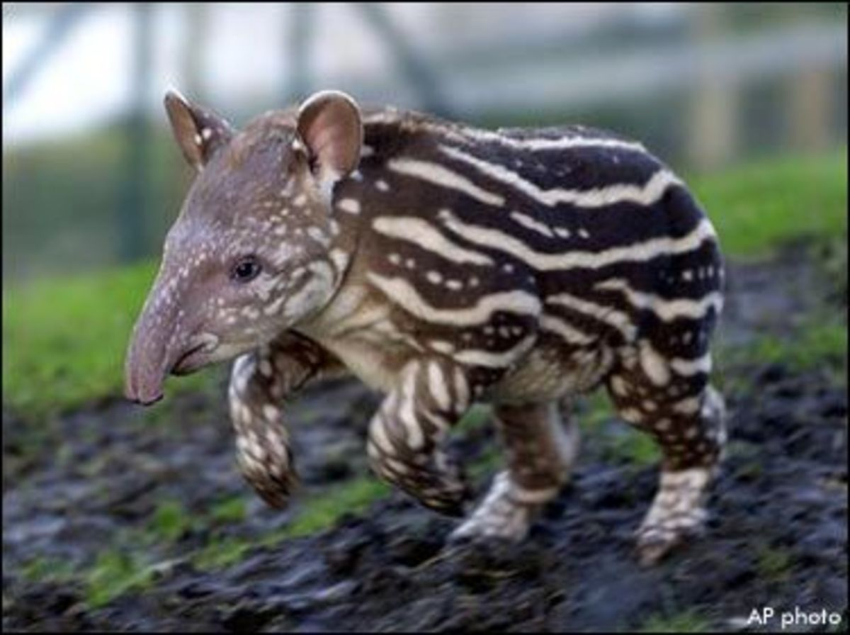 25 Most Amazing and Unusual Animals on Earth | HubPages
