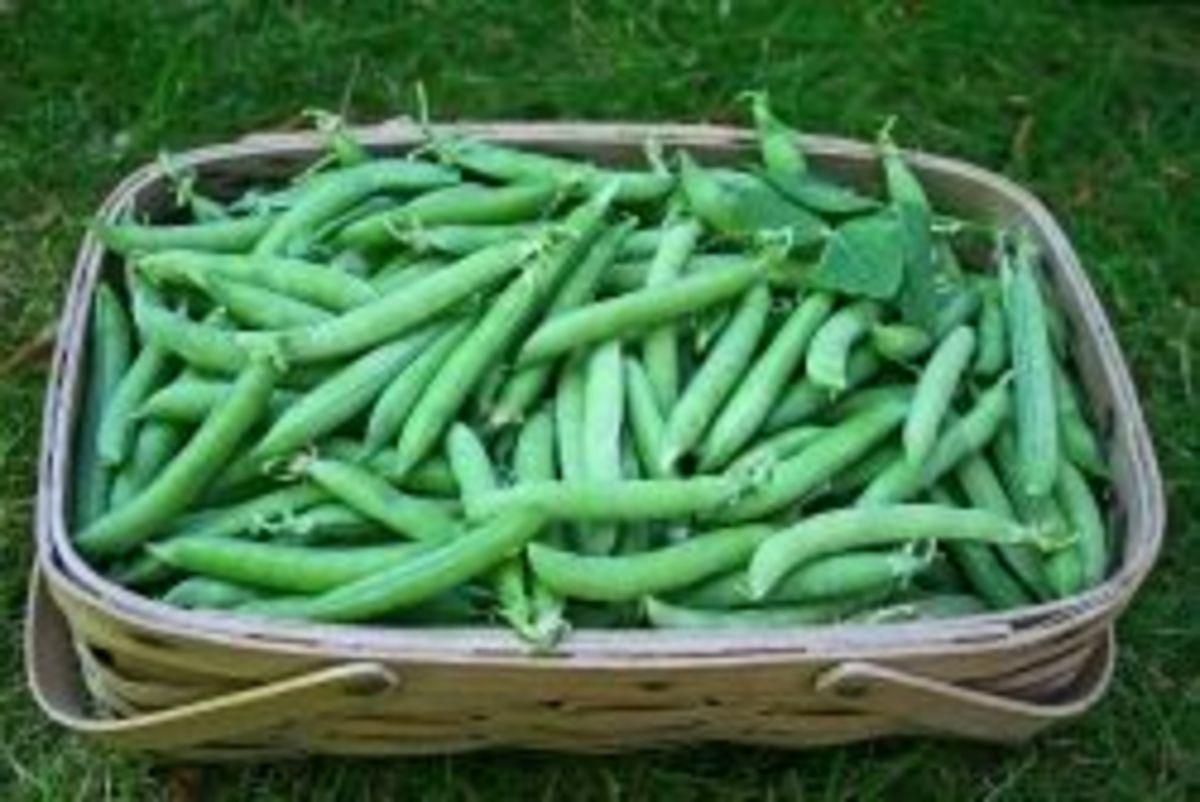 pea-soup-recipe-and-garden-peas