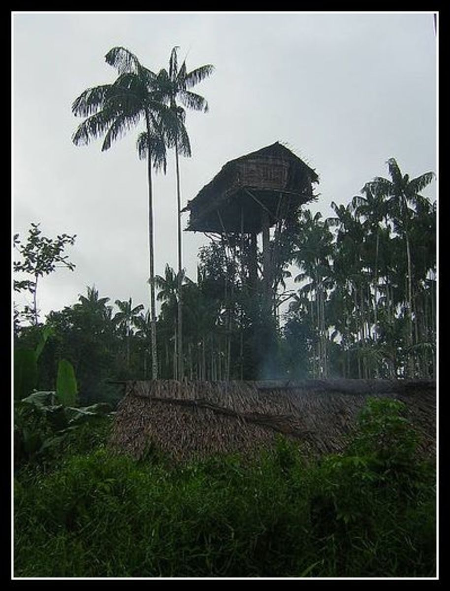 Papua treehouse