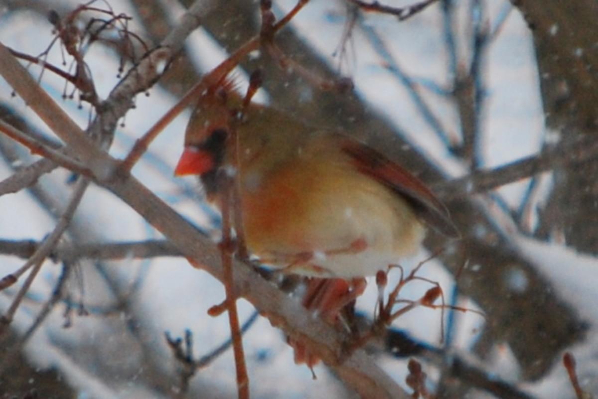 birds-beyond-the-glass