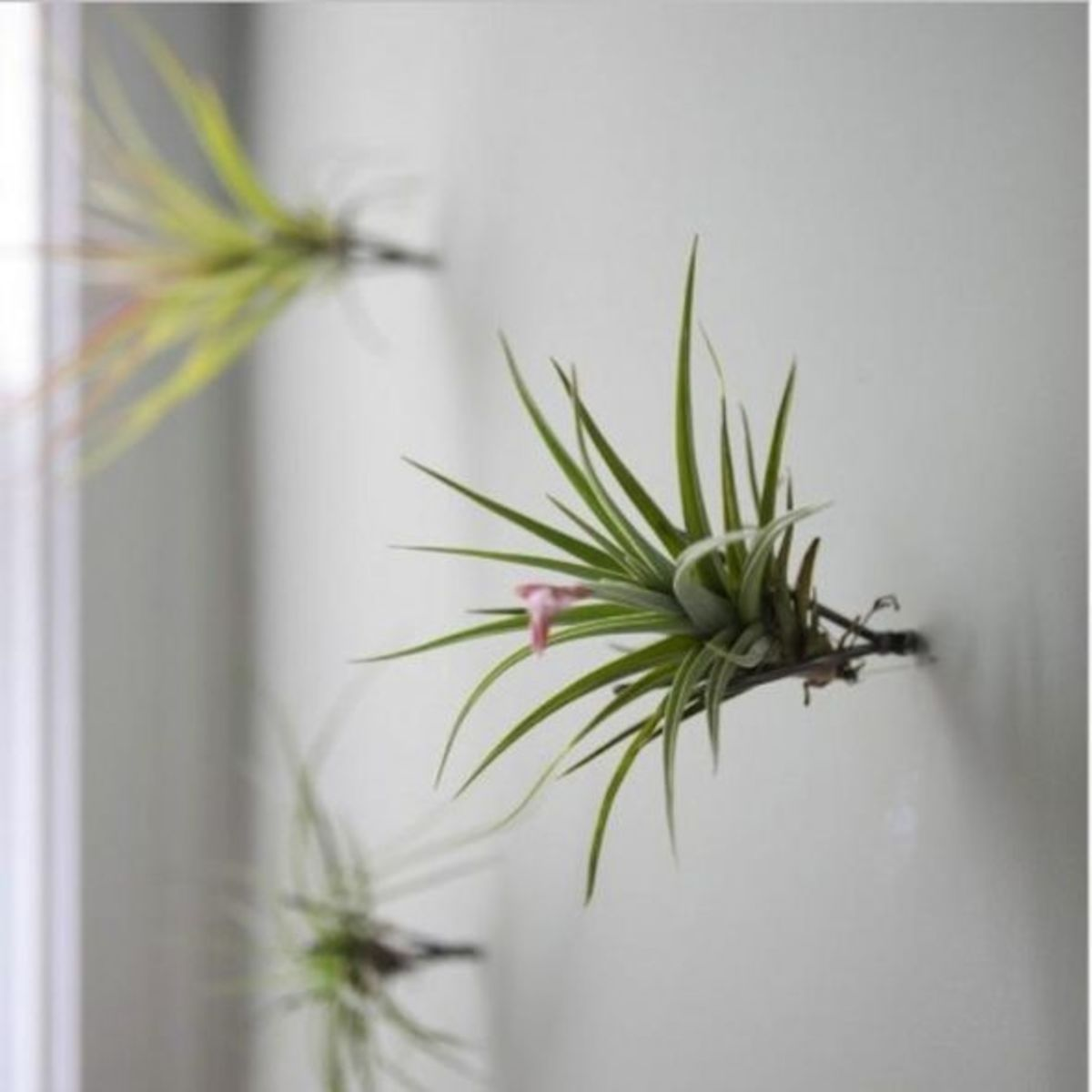 Wall art diy on the cheap hubpages for Air plant art