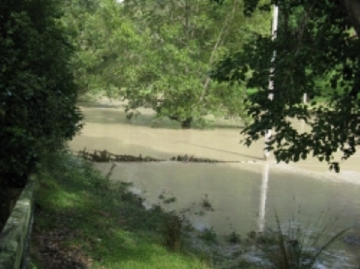 Flooded paddock beside our house.Photo Credit - Elsie Hagley