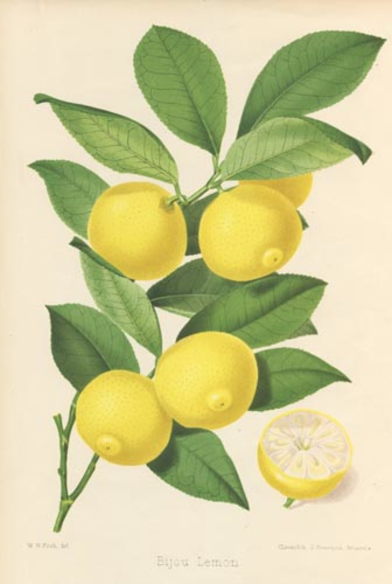 Free cross stitch pattern lemons on branch