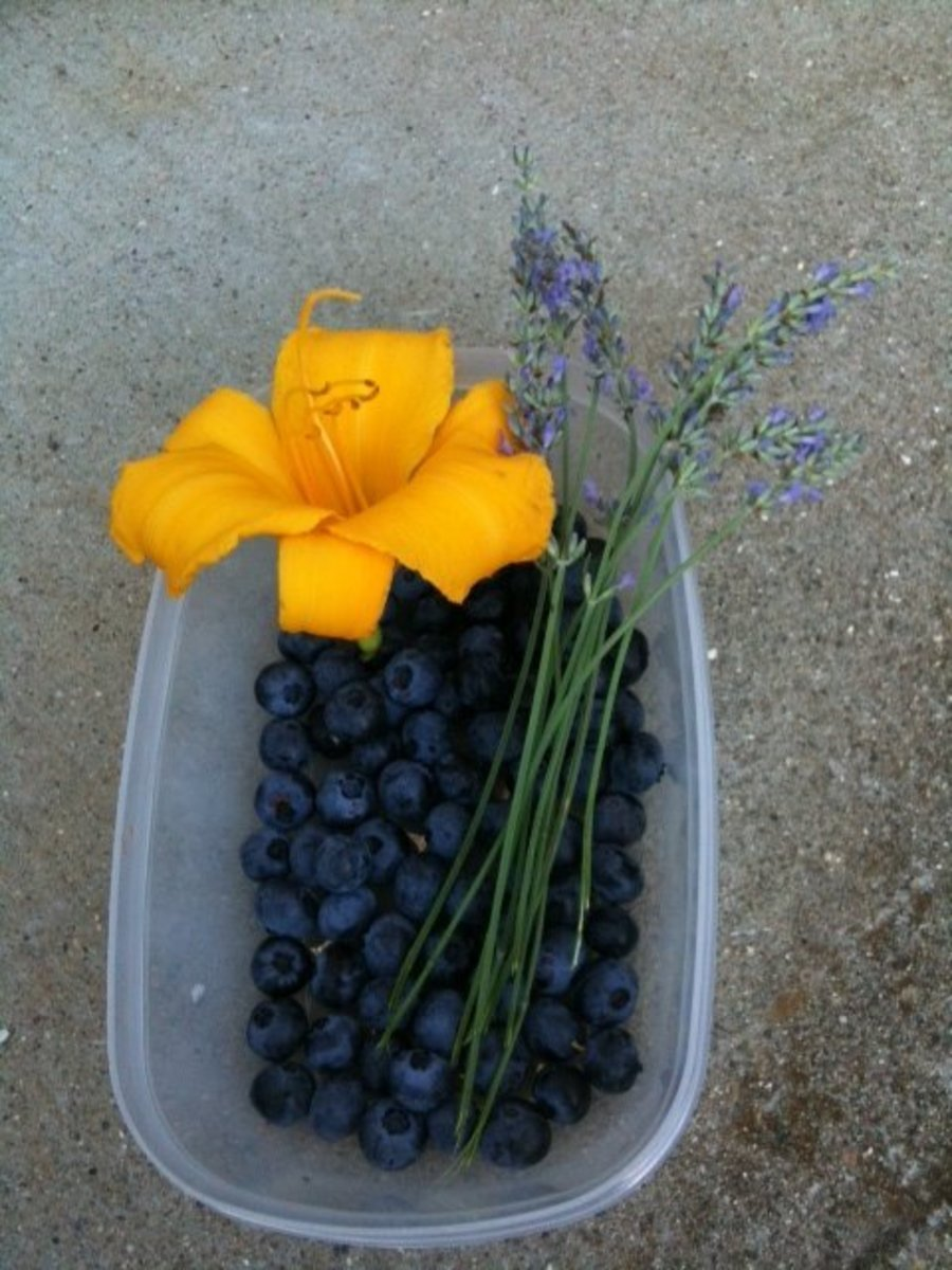 Edibles from my garden:  Daylily Blossom, Blueberries, Lavender Blossoms